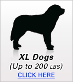 XL Dogs
