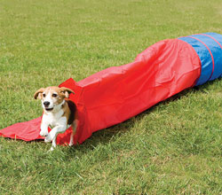 PetSafe Dog Agility Equipment PDT00 11029